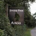 Spring Farm Alpacas road sign