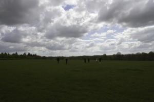 Alpaca trekking at Spring Farm  in Sussex
