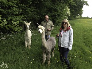 walk alpacas in sussex