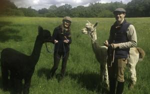 walk alpacas in sussex near the ashdown forest