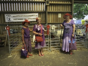 Meet our walking alpacas at the South of England Showground Sussex