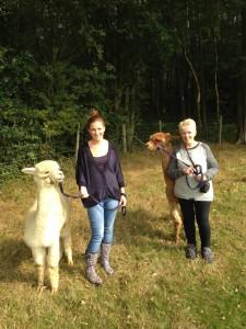 Walking with alpacas in Sussex