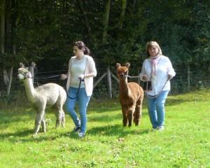 You can walk alpacas here at Spring Farm
