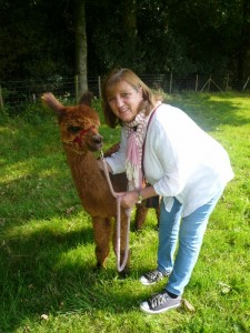 We offer alpaca walks and interactions