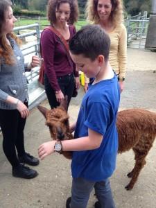 Meet baby alpacas