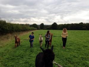 Walk alpacas in east sussex