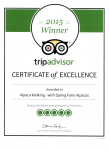 2015 certificate of excellence from Tripadvisor