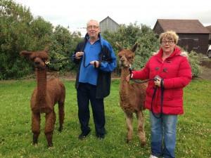 Birthday and anniversary walk with alpacas