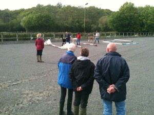 Alpaca agility in our sand school on our alpaca open day