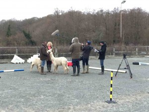 JB and Vicki filming alpaca halter training
