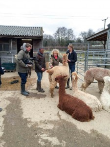 CBeebies at Spring Farm Alpacas