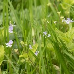 spring farm's April wild flowers