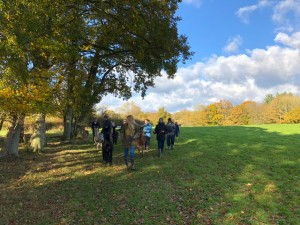 Autumn colours on November alpaca walk