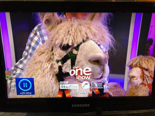 Llama on The One Show
