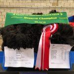 Phoenix - Reserve Champion black huacaya fleece