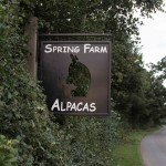 Spring Farm Alpacas road sign