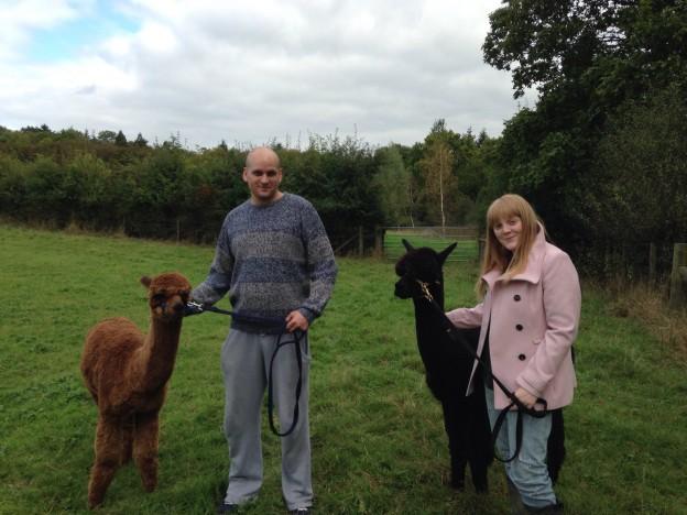 Walk alpacas in the Sussex AONB