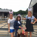 alpaca hen party