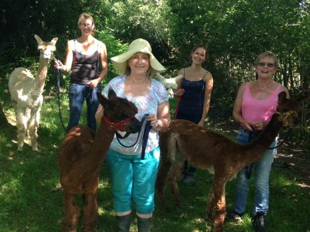 Walk or trek alpacas in sussex