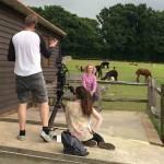 TV interview with alpacas