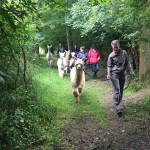 Green lane alpaca trekking