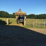 Hay making at alpaca walking