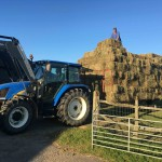 Alpaca trekking takes second stage to hay making