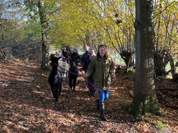 Autumn colours on November alpaca walk