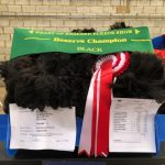 Phoenix - Reserve Champion black huacaya fleece