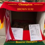 Saffron - Champion brown suri fleece