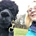 Alpaca selfie on alpaca walk