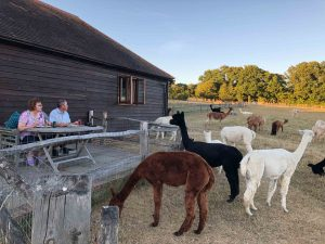 lodge at spring farm alpacas with a view