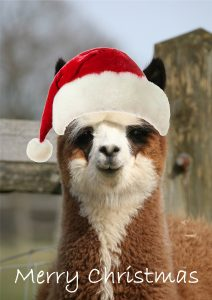 Alpaca christmas card as santa