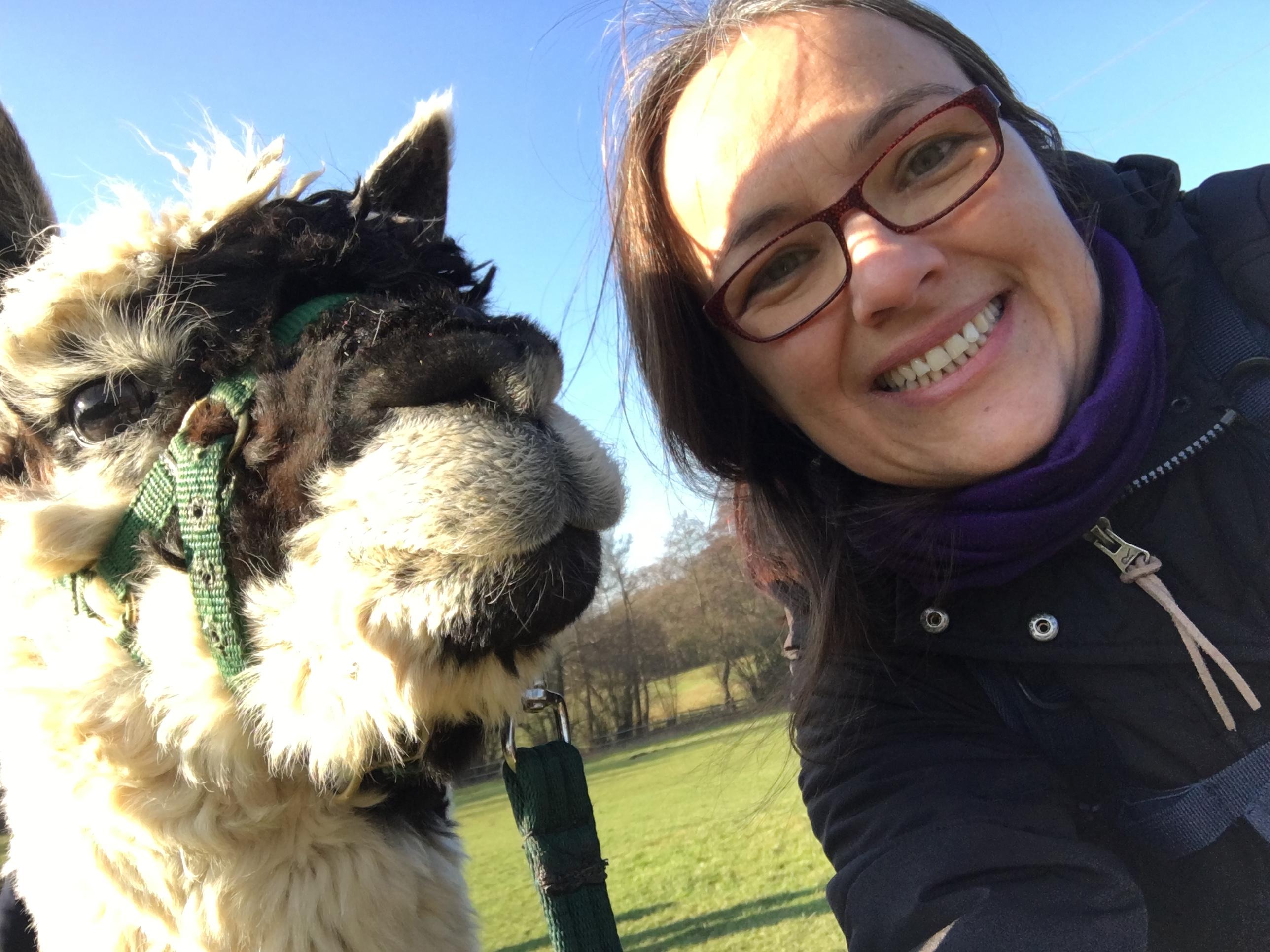 Alpaca selfies