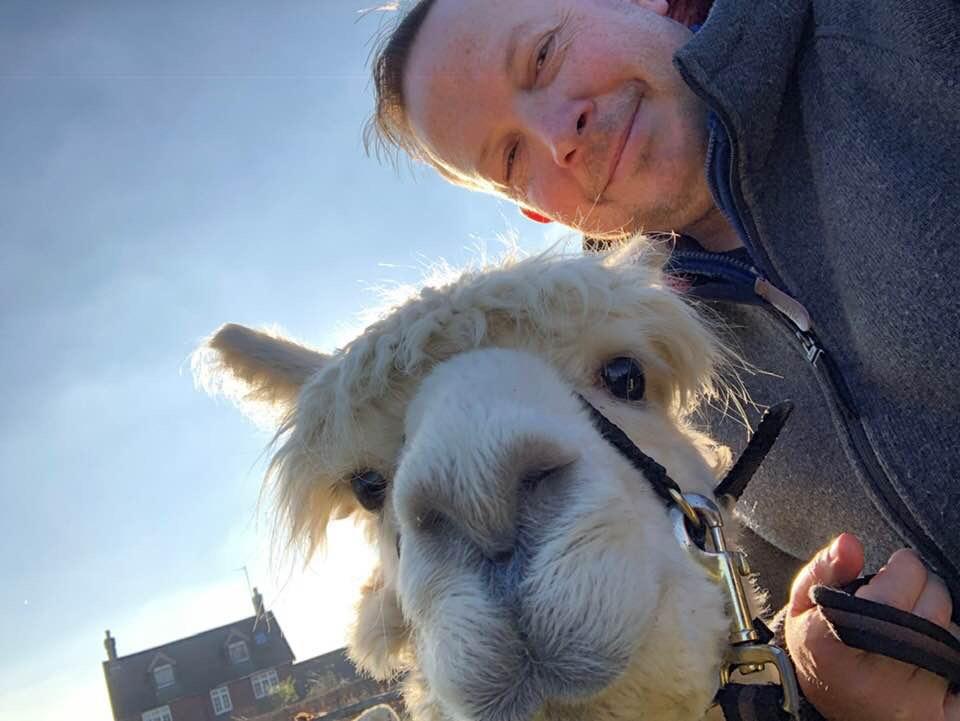 Alpaca selfy
