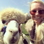 alpaca selfie taken at spring farm alpacas