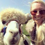 alpaca selfie taken at spring farm alpacas