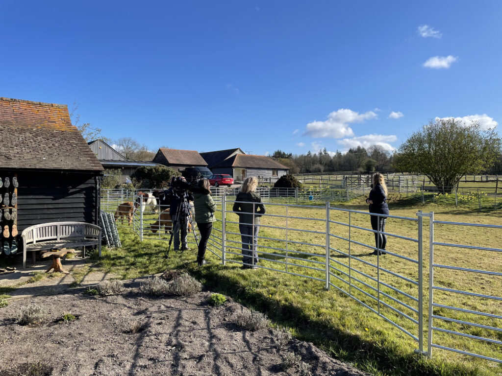 Josie Gibson filming for This Morning with alpacas