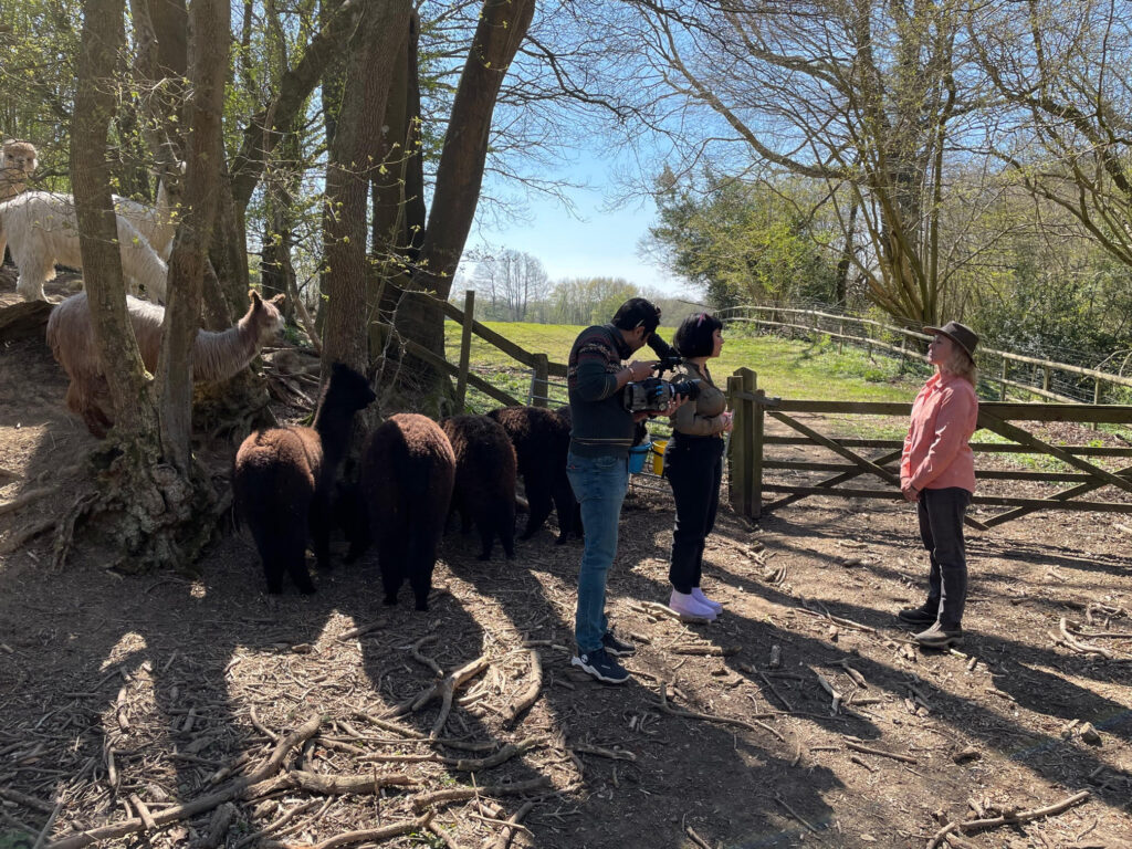 Interview about alpaca walking with Lola and Ali from Marjan and Vicki from Spring Farm Alpacas