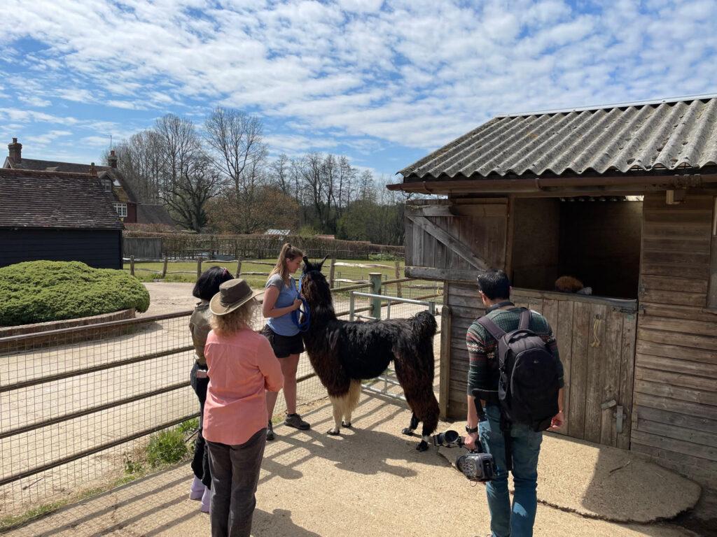 Filming alpaca walking with Marjan TV Network
