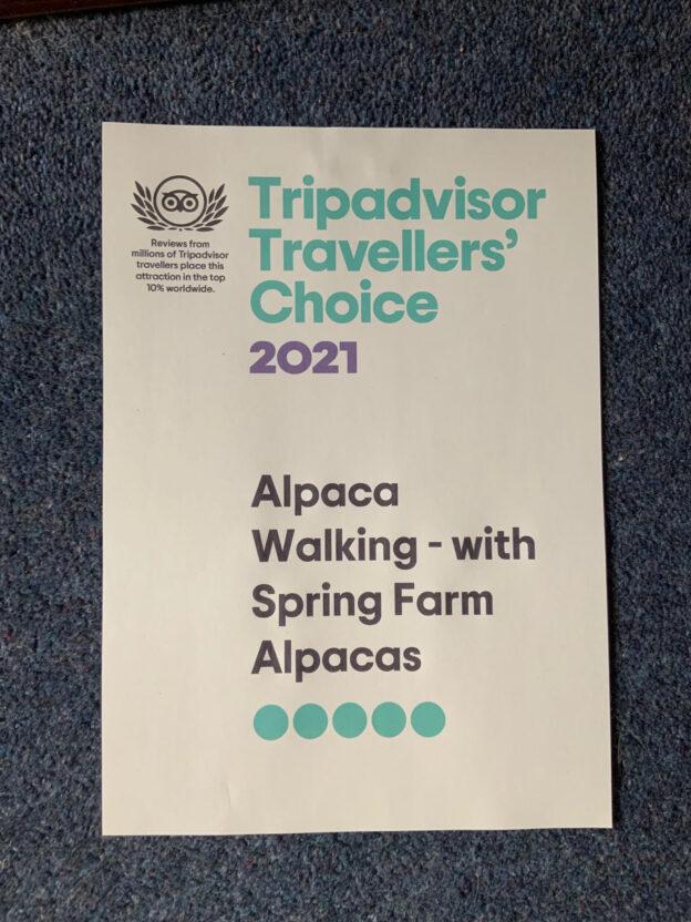 Tripadvisor Travellers' Choice 2021 award for alpaca walking with spring farm alpacas